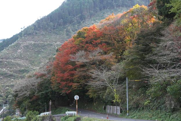 湯出神社の紅葉は先っぽのみ