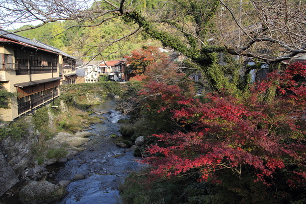 写真: 湯の鶴温泉街の紅葉