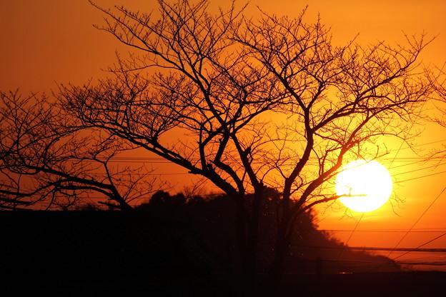 Photos: 冬の落陽
