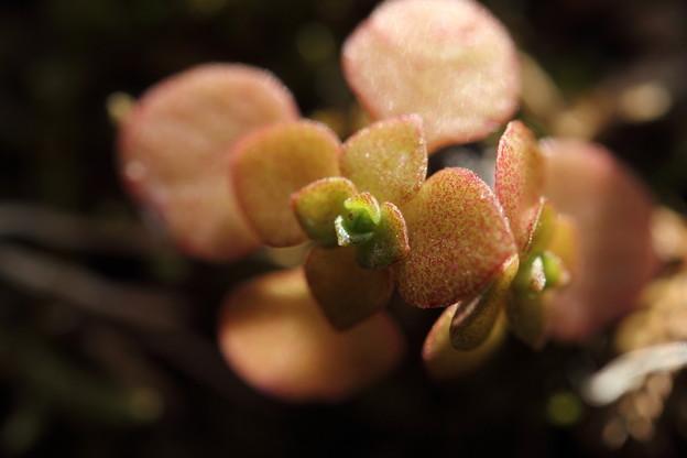 春に向かい芽吹く