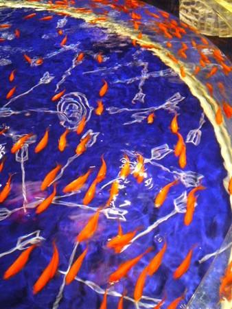 金魚の魚群