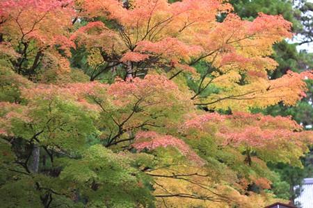 瑞巌寺、紅葉。