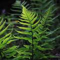 greengreen2