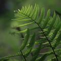 greengreen1