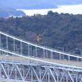 写真: 大橋に舞う