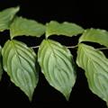 写真: 葉っぱファミリー
