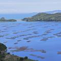 Photos: 牡蠣いかだと島