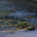写真: 落ち葉の流れ