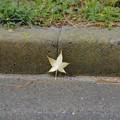 Photos: 落葉も背もたれ
