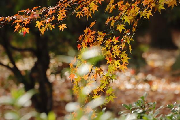 秋の木もれ日