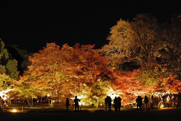 ゆく秋を愛でながら