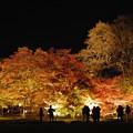 写真: ゆく秋を愛でながら