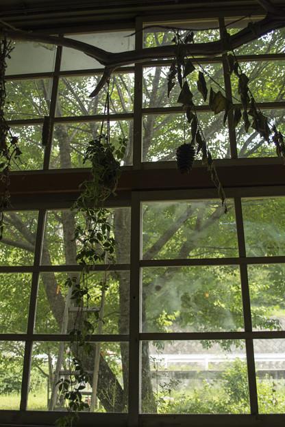 森の風が見える窓