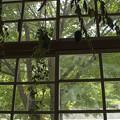 写真: 森の風が見える窓