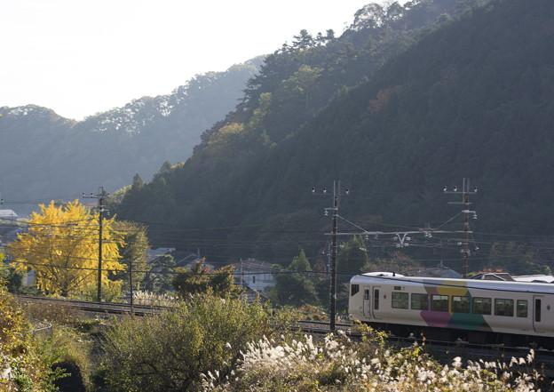 武田菱と裏高尾の秋