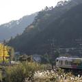 写真: 武田菱と裏高尾の秋