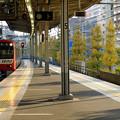 写真: 並木沿いの駅