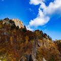 写真: 青空ー木々の色彩