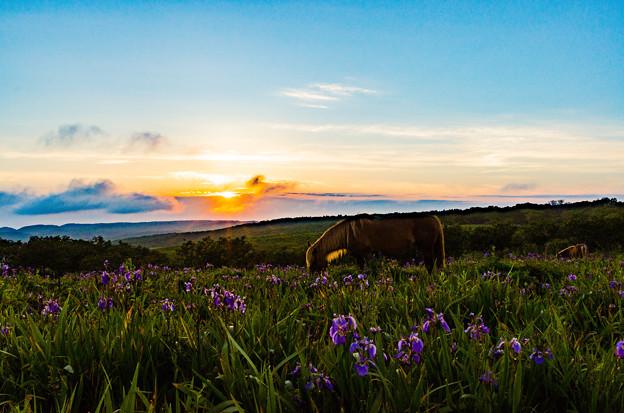 写真: 放牧