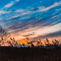 写真: 晩秋の落陽