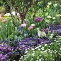 春の庭最終章