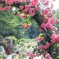 写真: 薔薇の世界への入口