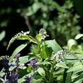 庭で揺れる花