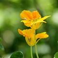 夏に輝く花