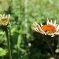 夏に元気になる花