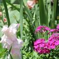 今年の夏の庭