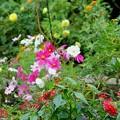 雨の日のお庭
