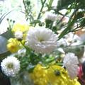 小さな菊の咲く季節