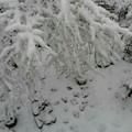 写真: 大雪の日