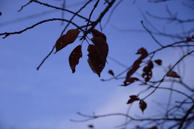 Photos: 2014-11-24