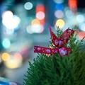 Photos: 2014-12-17