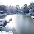 写真: 20141218白鳥庭園(4)