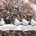 Photos: 凍ってますよ?
