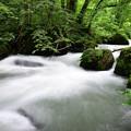 写真: 奥入瀬渓流にて