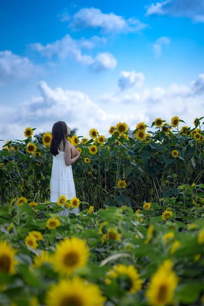 向日葵のある景色