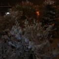 Photos: 積雪