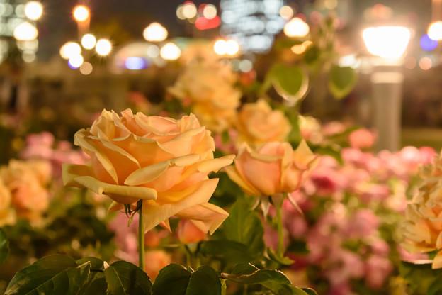 写真: 夜も美しく