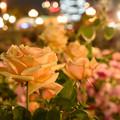 Photos: 夜も美しく