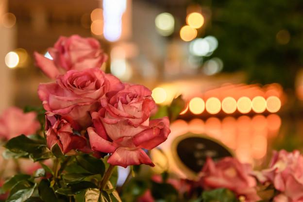 写真: 夜も美しく 其の弐