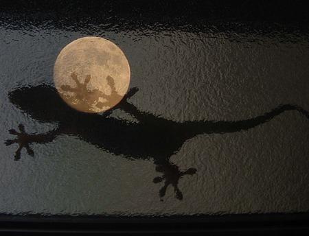 月面にヤモリの足