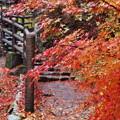 写真: 三郎の滝5