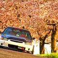 Photos: 桜と愛車