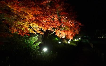妙満寺・ライトアップ04
