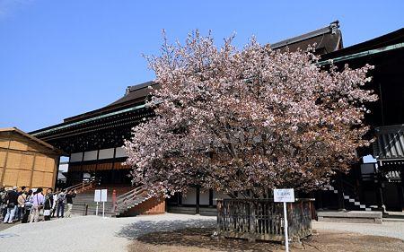 京都御所28