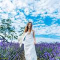 写真: Lavender's Blue