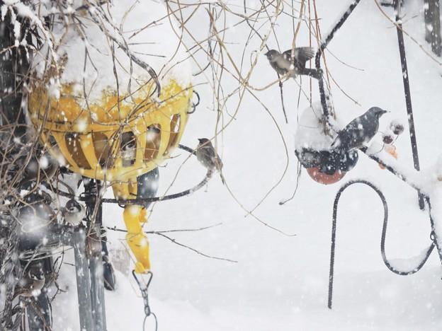 Photos: 雪の中を…